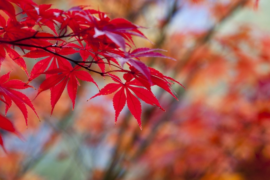 autumn-leaves-holiday-gift-guide