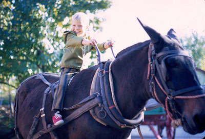 My son on mule at Silver Dollar City, an Ozark visitor from 1970