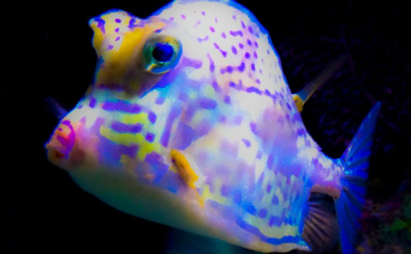 Boxfish at Wonders of Wildlife National Museum & Aquarium