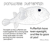 Porcupine Pufferfish Color Me Page
