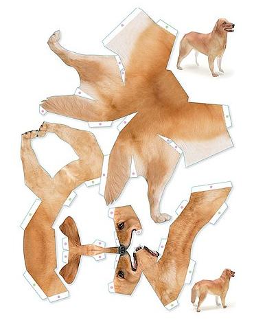 swissmiss unfolded dog