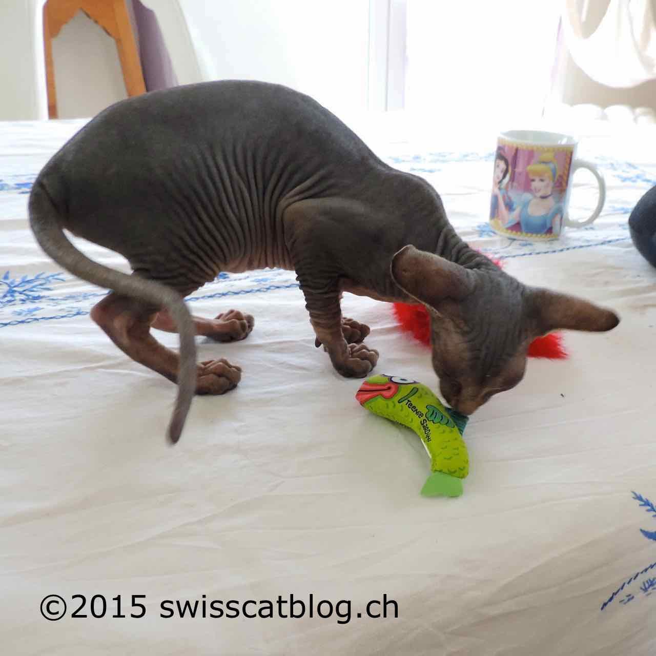 Bain de chats the swiss cats for Jardin bonheur 2015