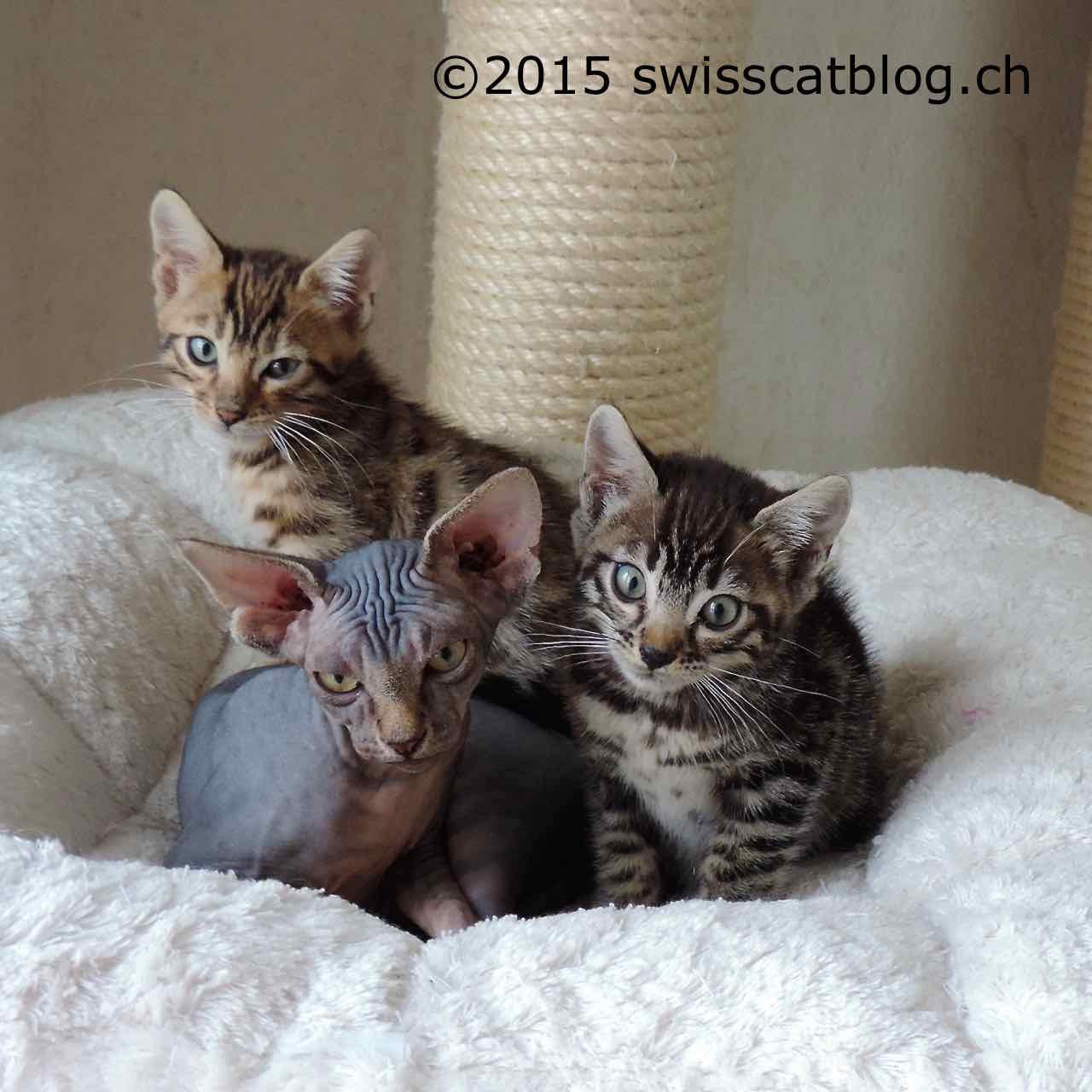 Bagno di gatti the swiss cats for Jardin bonheur 2015