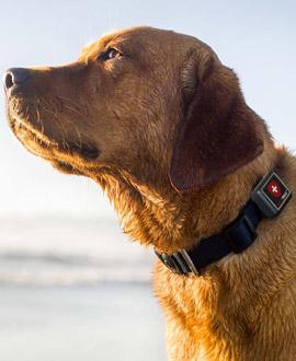 GPS für Hunde & Katzen