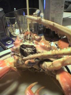 昨日、瓦邸にて。チェリーと蟹で遊んでる様子。ごちそうさまでしたぁ~