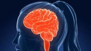 Vår hjärna är full av allt möjligt