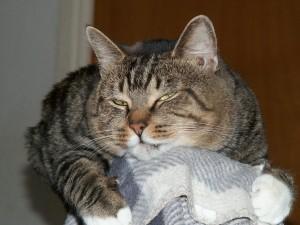 Katten Mio