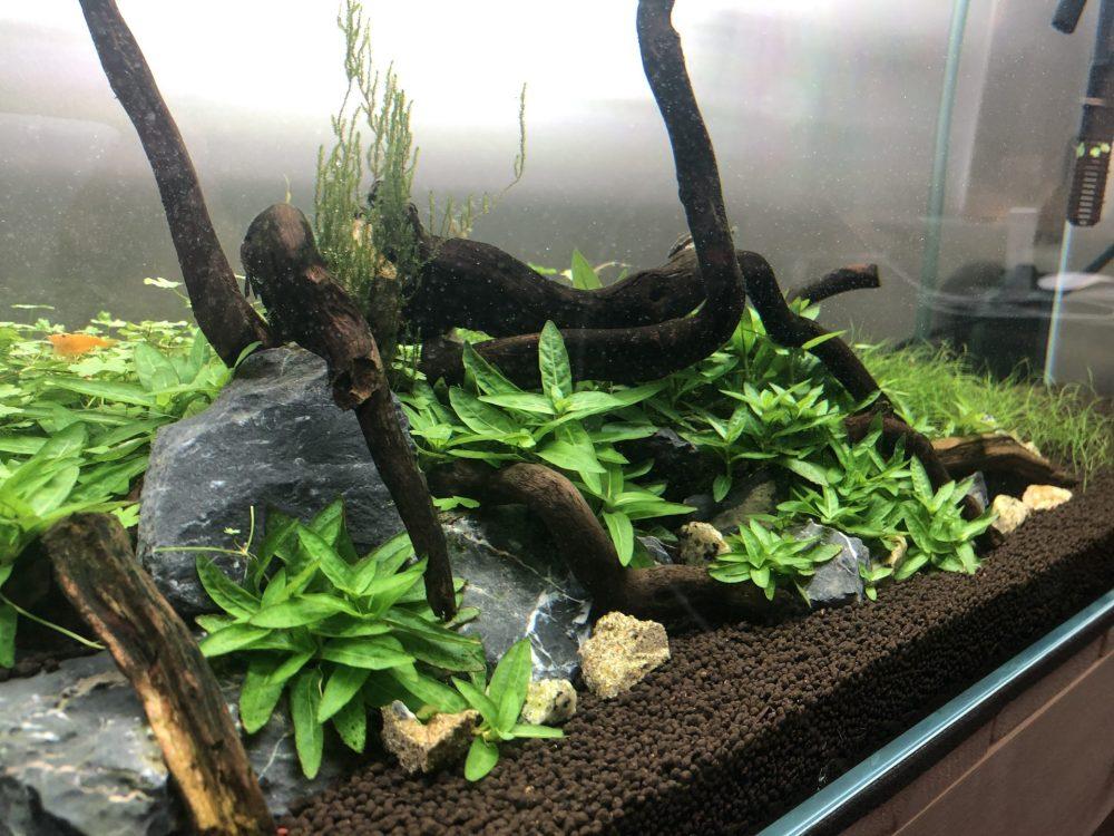 medium resolution of aquarium diy co2 kit citric acid vinegar and baking soda