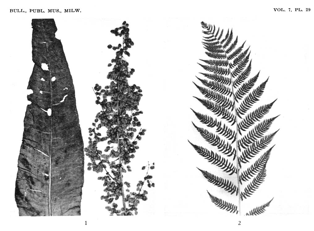 Ethnobotany of the Forest Potawatomi