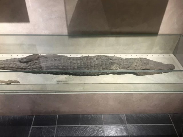 Celebrating Heritage Days in Marseille, France: MUCEM Mummified Crocodile