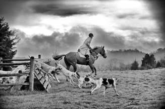 Hillsboro Hounds huntsman and hounds over a coop. ©William Kenner