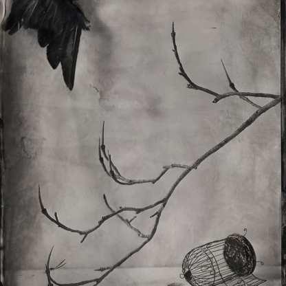 Black Bird ©Nicole LeCorgne