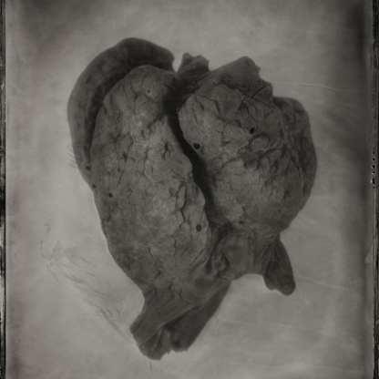 Manzanita Heart ©Nicole LeCorgne