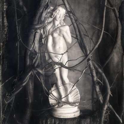 Venus Entwined ©Nicole LeCorgne