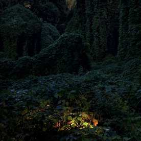 Morning Light on Fatherland ©Ben Hillyer