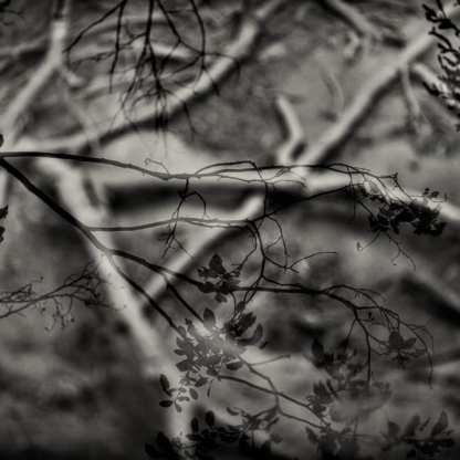 Resurrection ©Carolyn Meltzer