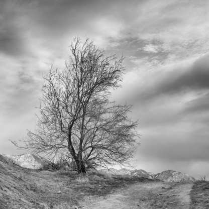 Road to Nowhere ©Carolyn Meltzer