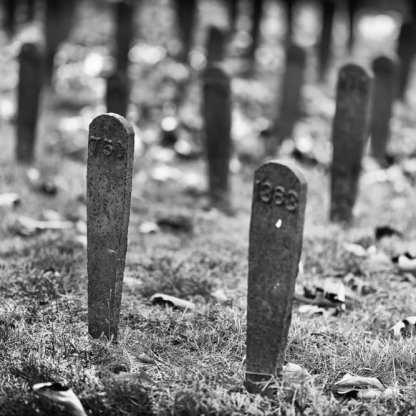 The Forgotten ©Carolyn Meltzer