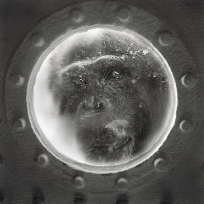 Chimpanzee, Krefeld, Germany, 2010 ©Anne Berry