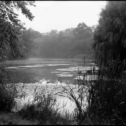 Untitled, Prospect Park Lakeside 2021 ©Kent Meister