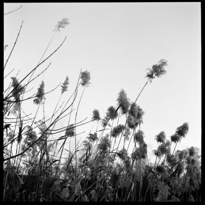 Untitled, Prospect Park Lakeside 2019 ©Kent Meister
