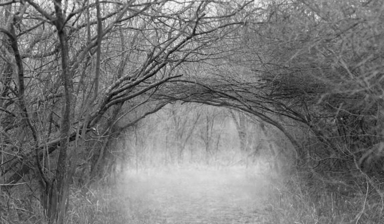 The Trailhead by Allison Jarek
