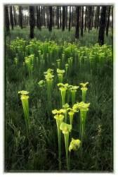 Picher Plants