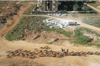 انتشار الكلاب والأغنام في أحد شوارع طرطوس