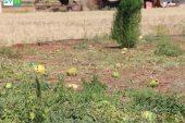 """المزارعون يتكبدون خسائر في موسم """"الجبس"""" بريف حلب"""
