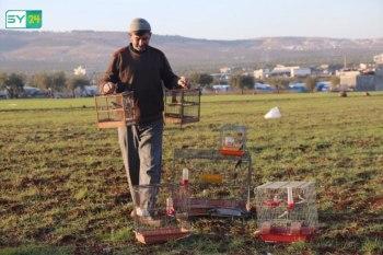 صيد الحسون.. مهنة وهواية لشاب مهجر شمال حلب