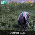 ورشات من النساء تعمل في قطف الخضروات الصيفية بريف إدلب