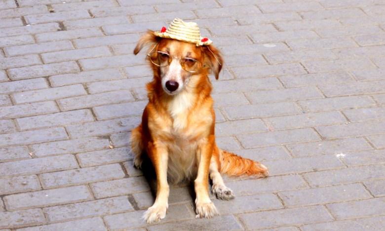 Bettelhund