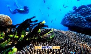 Snorkeling Pulau Pari 1