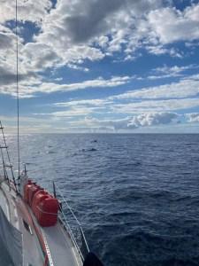 Besøg af delfiner