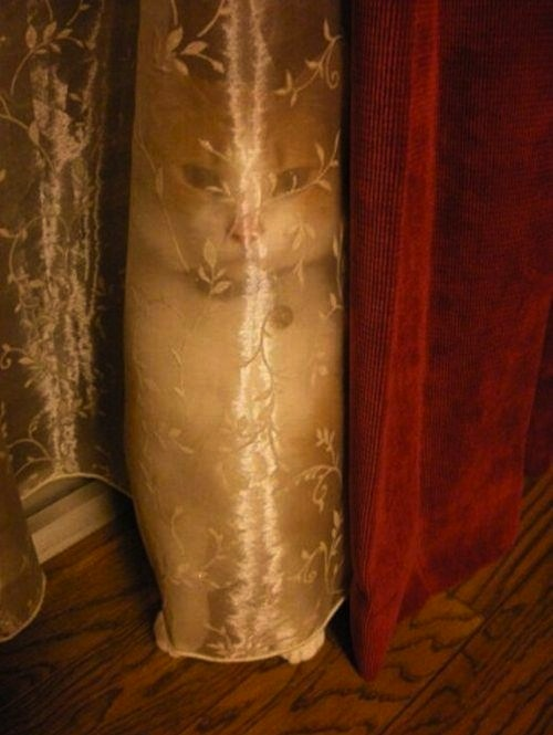 Cats have ghosts