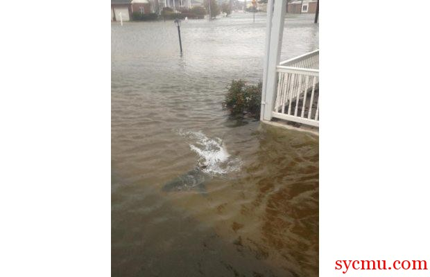 Fake Shark image from Hurricane Sandy