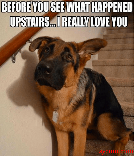Dog Before you know what happened Upstairs