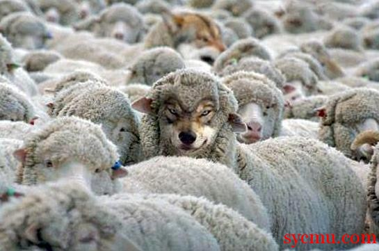 A wolf among the sheep - photoshopped
