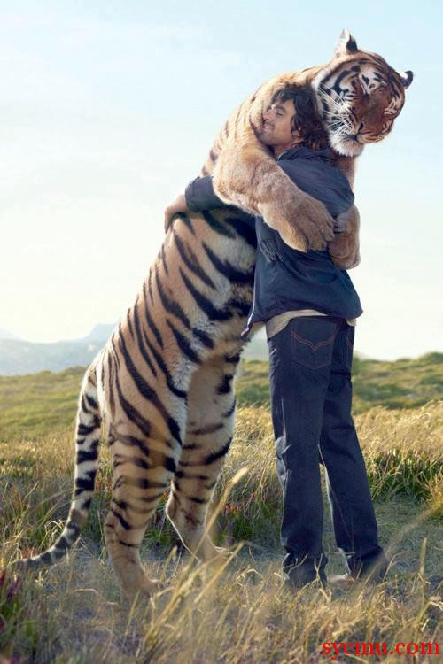 Largest tiger friendly man, Tiger Hugs man