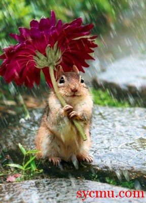 squirrel with flower for umbrella