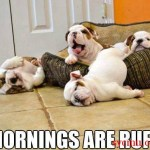 Mornings Are Ruff