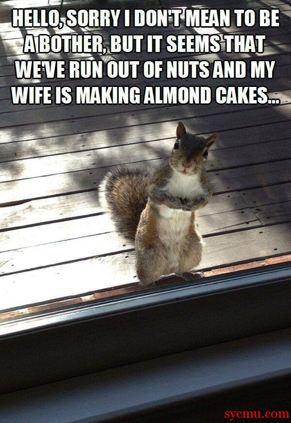 Squirrel funny saying