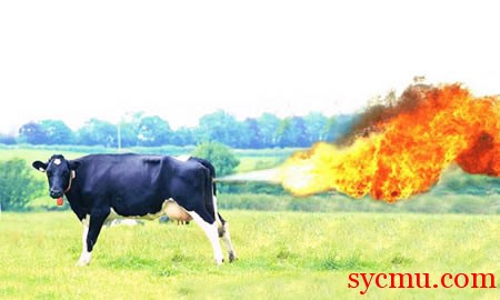 Cow farts fire