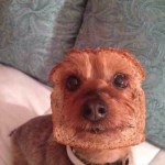 A Pure bread Puppy