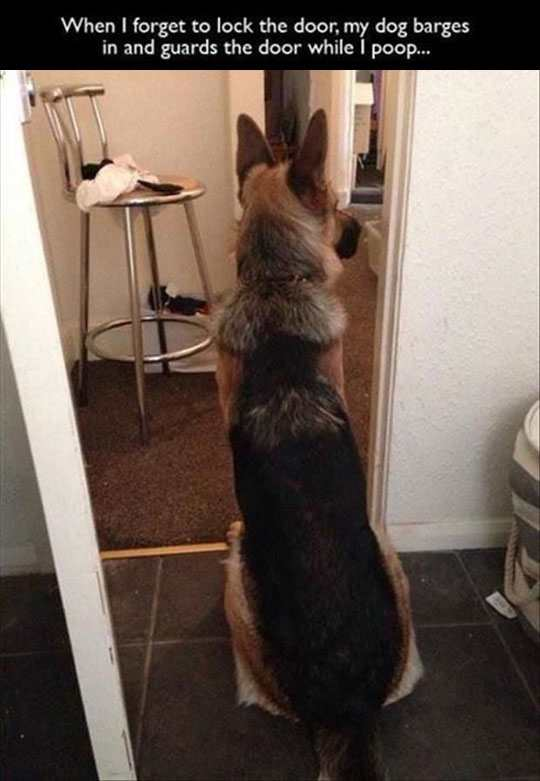 dog guarding bathroom door funny
