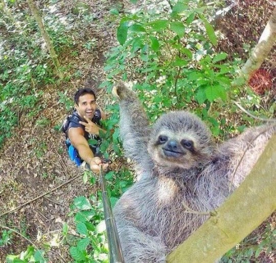 Sloth Selfie Stick Photobomb