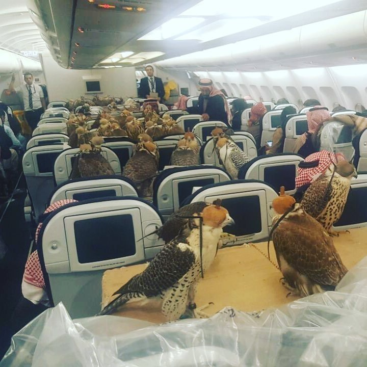 Saudi Prince and Hawks on plane