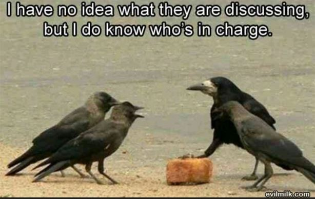 Crow in charge