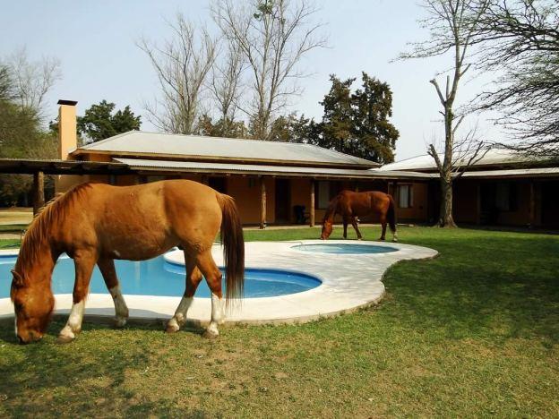 Algunos de nuestros caballos