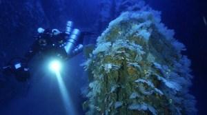 Tech2 Boat Dives - Technical Boat Dive - Tec 2 (51-78m)
